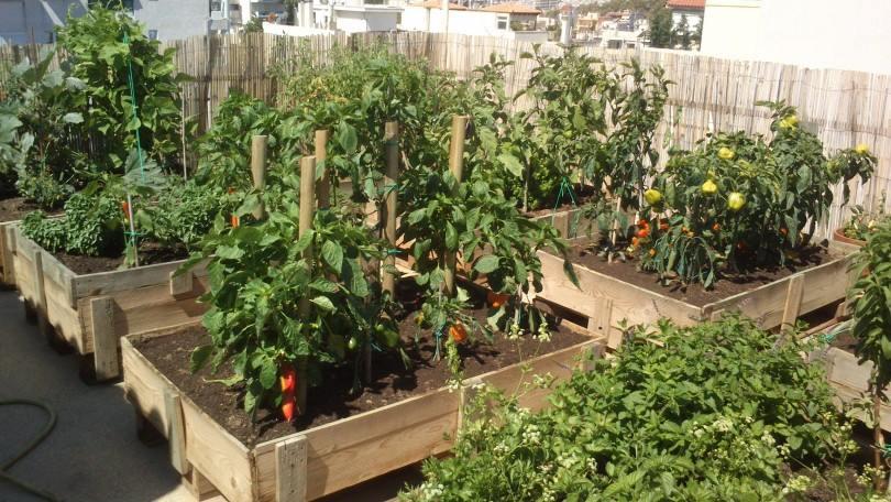 1η θέση διαγωνισμού - Επίμονος Κηπουρός
