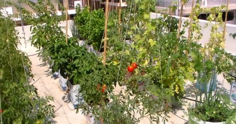 Συμμετοχή Επίμονος Κηπουρός