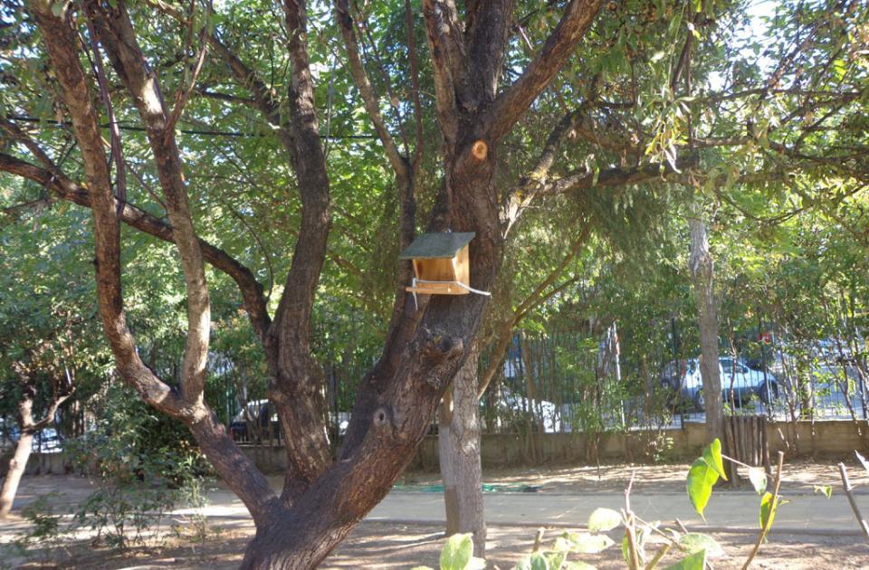 Δημοτικό Σχολείο Φιλοθέης: μια φωλιά για τα πουλιά