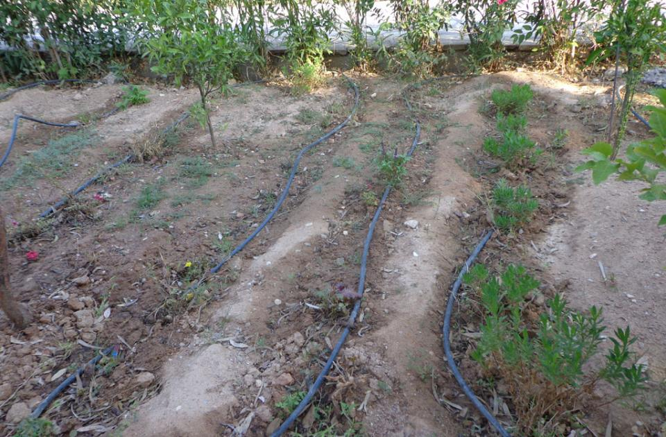 Δημοτικό Σχολείο Φιλοθέης: ο δικός μας σχολικός λαχανόκηπος