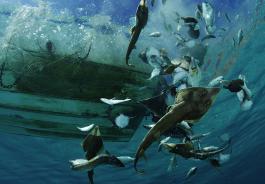 Πολλοί οι κίνδυνοι για τα ψάρια που φτάνουν στο τραπέζι μας