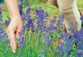 Γνωρίζεις τα αρωματικά φυτά; [Photo (c) ethnos.gr]