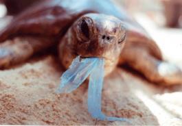 Χρησιμοποιούμε 240 πλαστικές σακούλες ανά άτομο τον χρόνο. Γιατί;