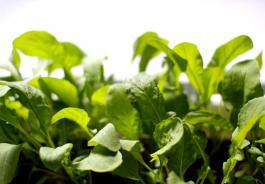 Κηπουροί στην πόλη - Photo (c) Flickr/Kallu
